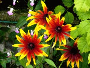 colori-nel-giardino-di-monet